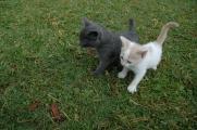 kattungarna 015